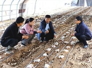 常明昌(右二)正在解说推广蘑菇莳植适用手艺。(受访者供图)