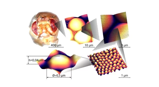 俄成功复制果蝇角膜纳米结构层