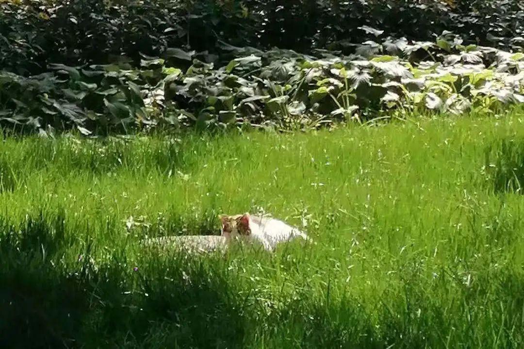 神奇动物在哪里?!图片