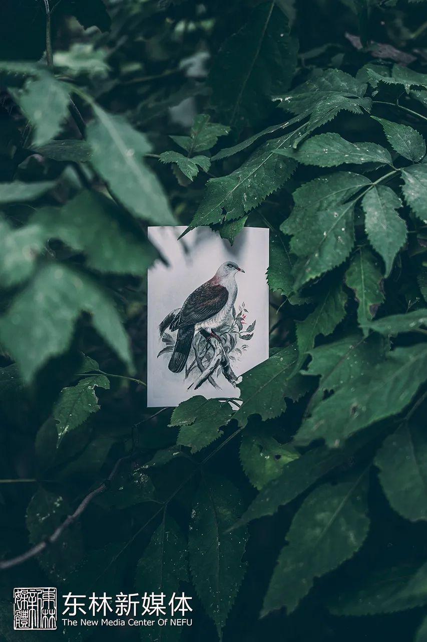 坐标东林,一场3600秒的鸟类观察!图片