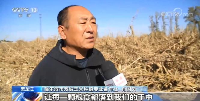黑龙江双城:抢收倒伏玉米 确保粮食颗粒归仓图片