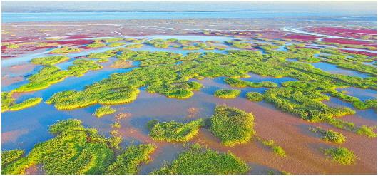 黄河三角洲——黄河入海千顷绿