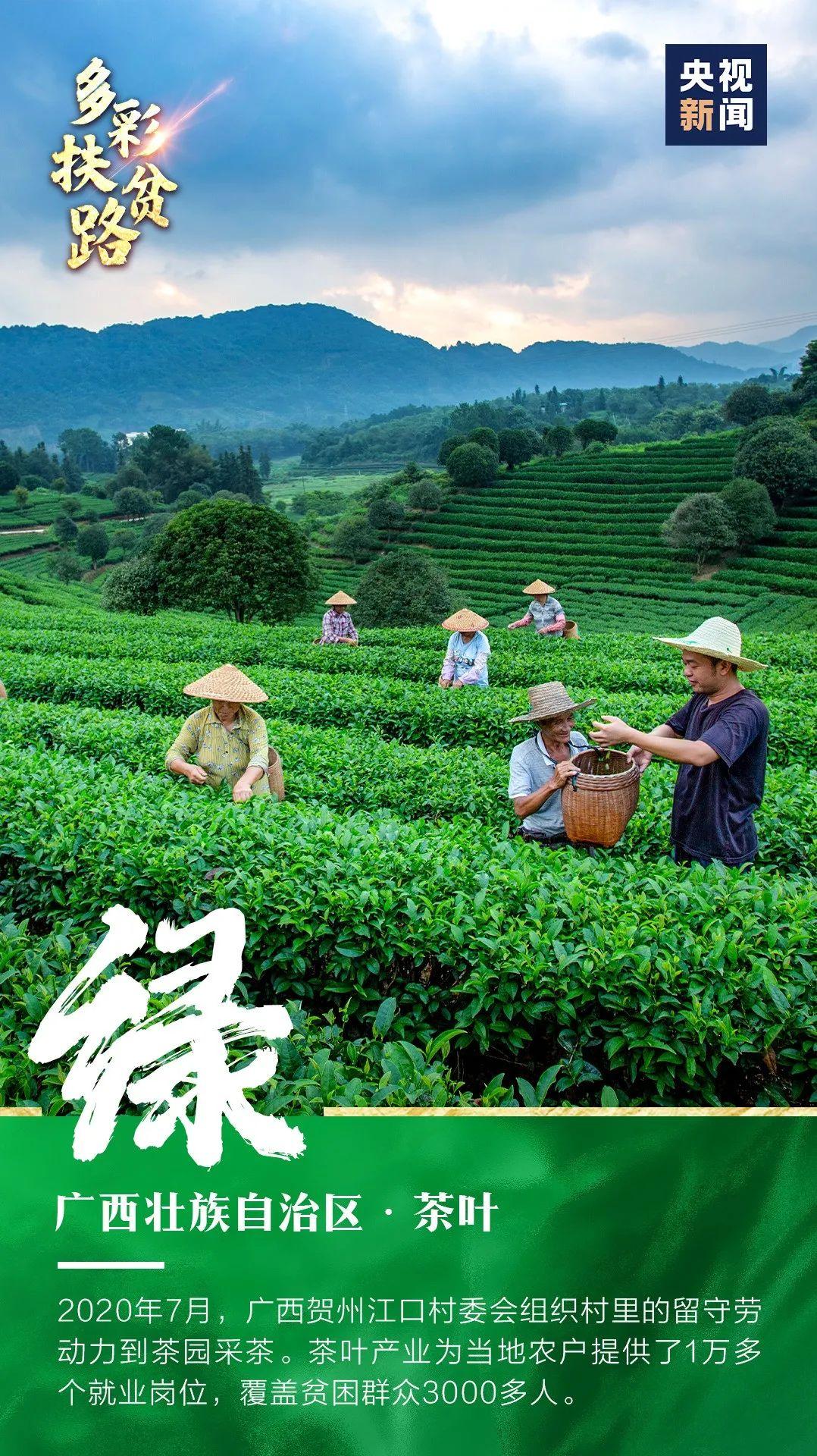 赞!贺州绿为中国扶贫添彩图片
