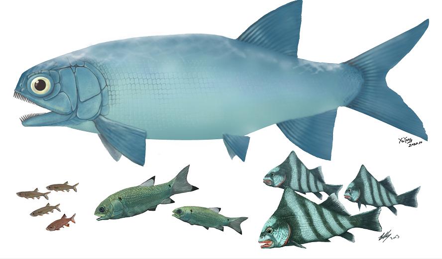 云南发现暴鱼化石 见证三叠纪海洋生物复苏图片