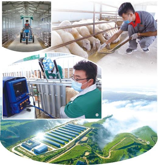 甘肃环县发展现代畜牧业 吸引大学毕业生返乡创业就业