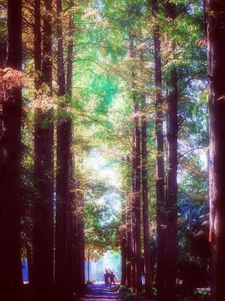 秋日的我扬,是超美的壁纸~图片