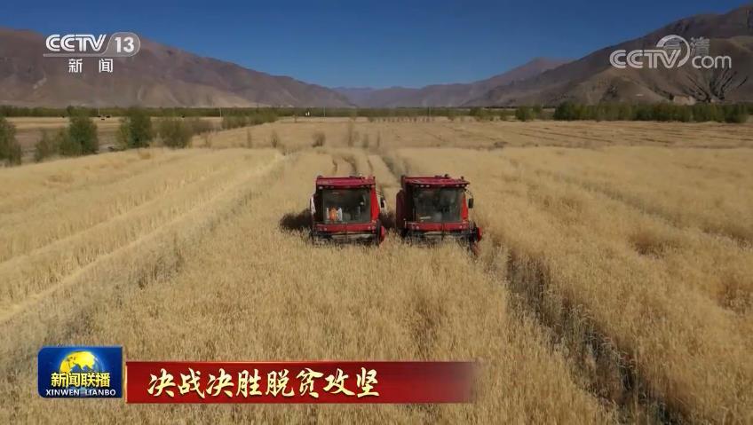 荒地变草地 带动西藏农牧民增收致富图片