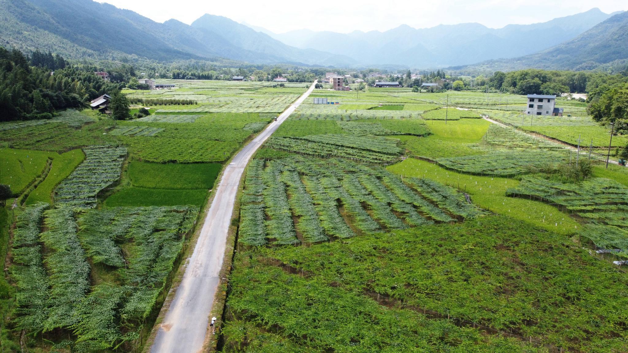图片·故事|新文村的幸福果图片