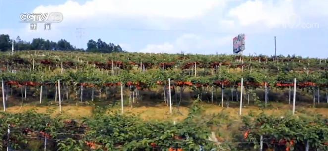 """""""十三五""""农业农村发展取得历史性成就图片"""