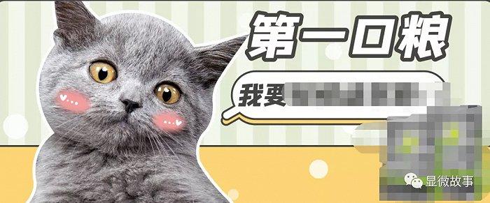 """宠物灰色产业链:""""毒猫粮""""多来自河北 给幼猫喂催产药"""