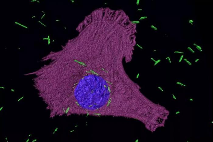 如子弹一样:科学家打造出能从里面加热并摧毁癌细胞的纳米粒子