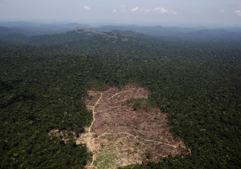 """巴西多名州长成立""""对抗气候危机""""联盟"""