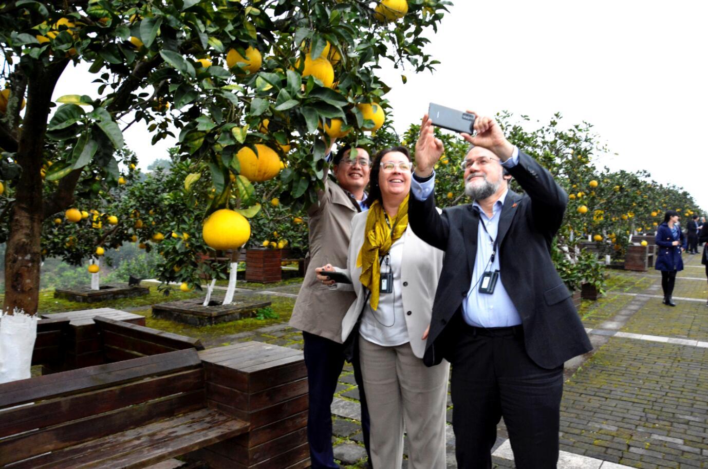 第三届长江三峡(梁平)国际柚博会将于11月6日开幕