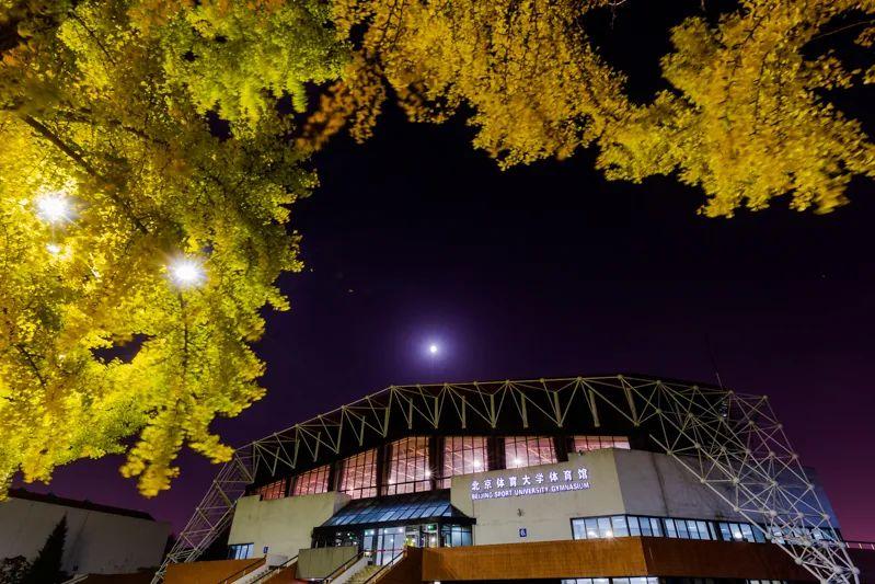 是谁把这金黄的树叶  洒遍北体校园图片