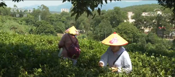 广东:乡村游受追捧  体验不一样的风景图片