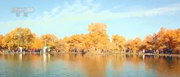 甘肃金塔:秋韵渐浓 万亩胡杨林迎八方来客图片