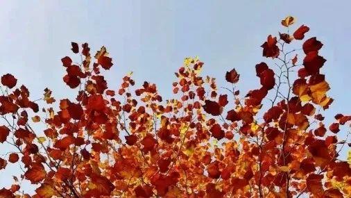 夜读丨秋叶 · 秋人图片