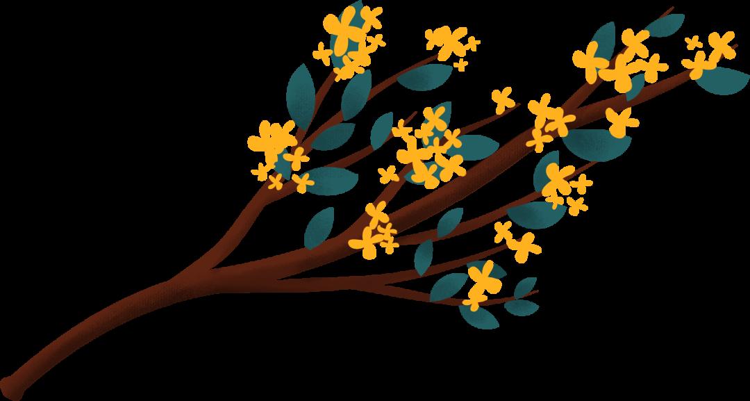 又是一年桂花季,花开芳香醉江南图片