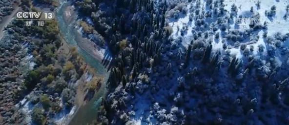 """新疆伊犁:秋景遇初雪 """"秋冬""""同框美不胜收图片"""