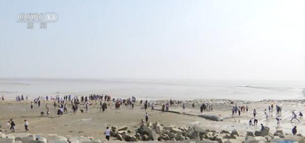 江苏东台:观鸟 踩泥滩 条子泥湿地体验滩涂乐趣图片