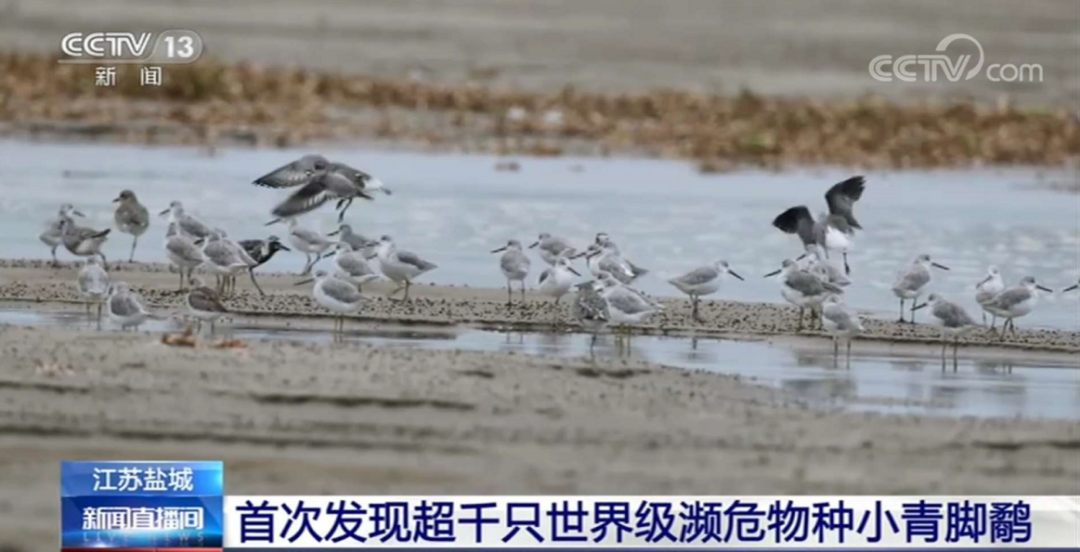 央视聚焦!首次发现!北林大科研人员发现超千只世界级濒危物种图片