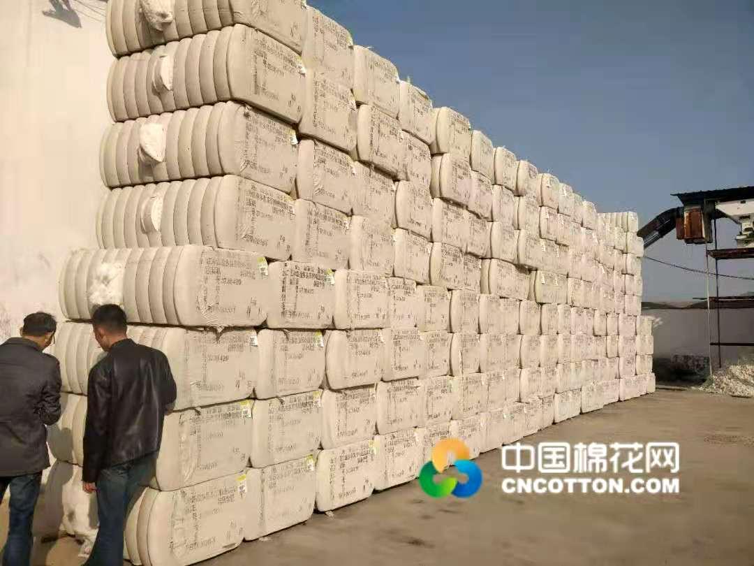 【2020新花上市】山东菏泽:轧花厂现货流动慢  多以仓单为主