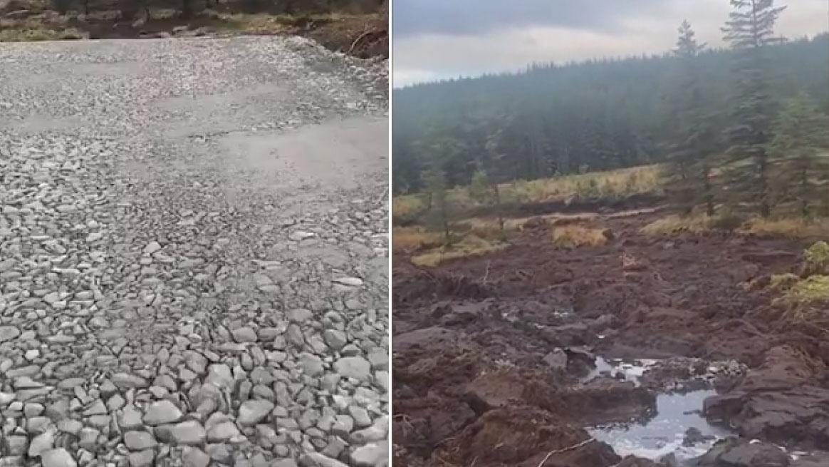 英国一处湿地发生滑坡 整片树林平移