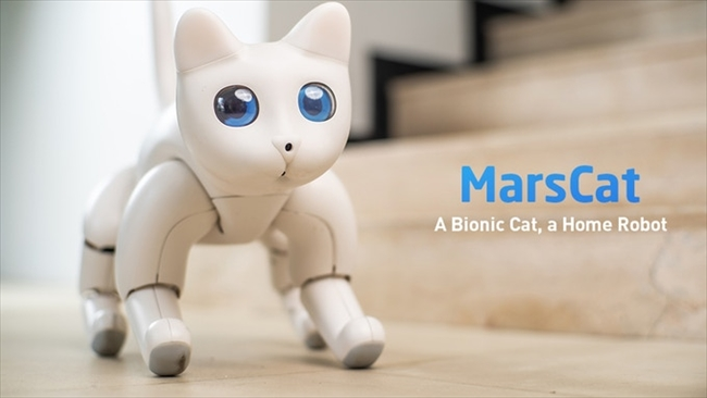 """对标索尼爱宝狗?新机器宠物猫""""火星猫""""人气众筹开启"""