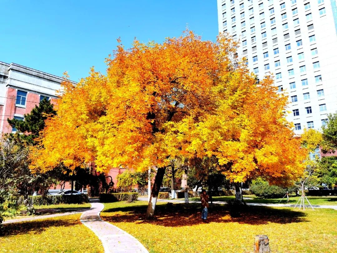 摄影征集 秋景摄影作品展图片
