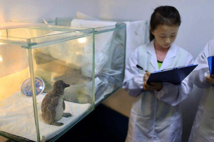 记录小企鹅成长 海洋科普教育基地举办保护海洋活动图片