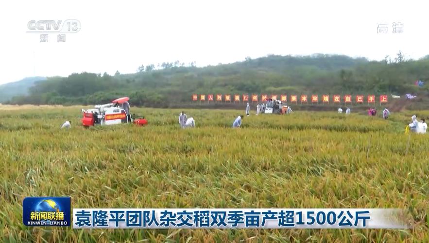 袁隆平团队杂交稻双季亩产超1500公斤图片