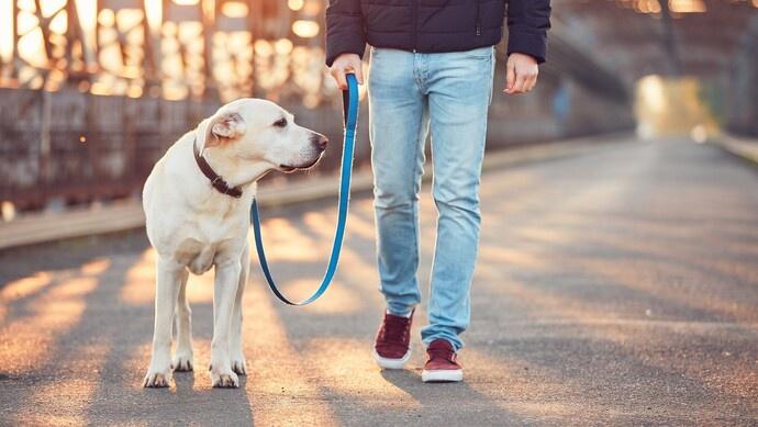 遛狗不牵狗绳将被抓拍并处罚!上海警方启用新型智能系统整治不文明养犬图片