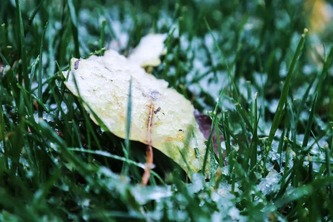信息科大·初雪 | 霜雪作飞花,遥来寄相思图片