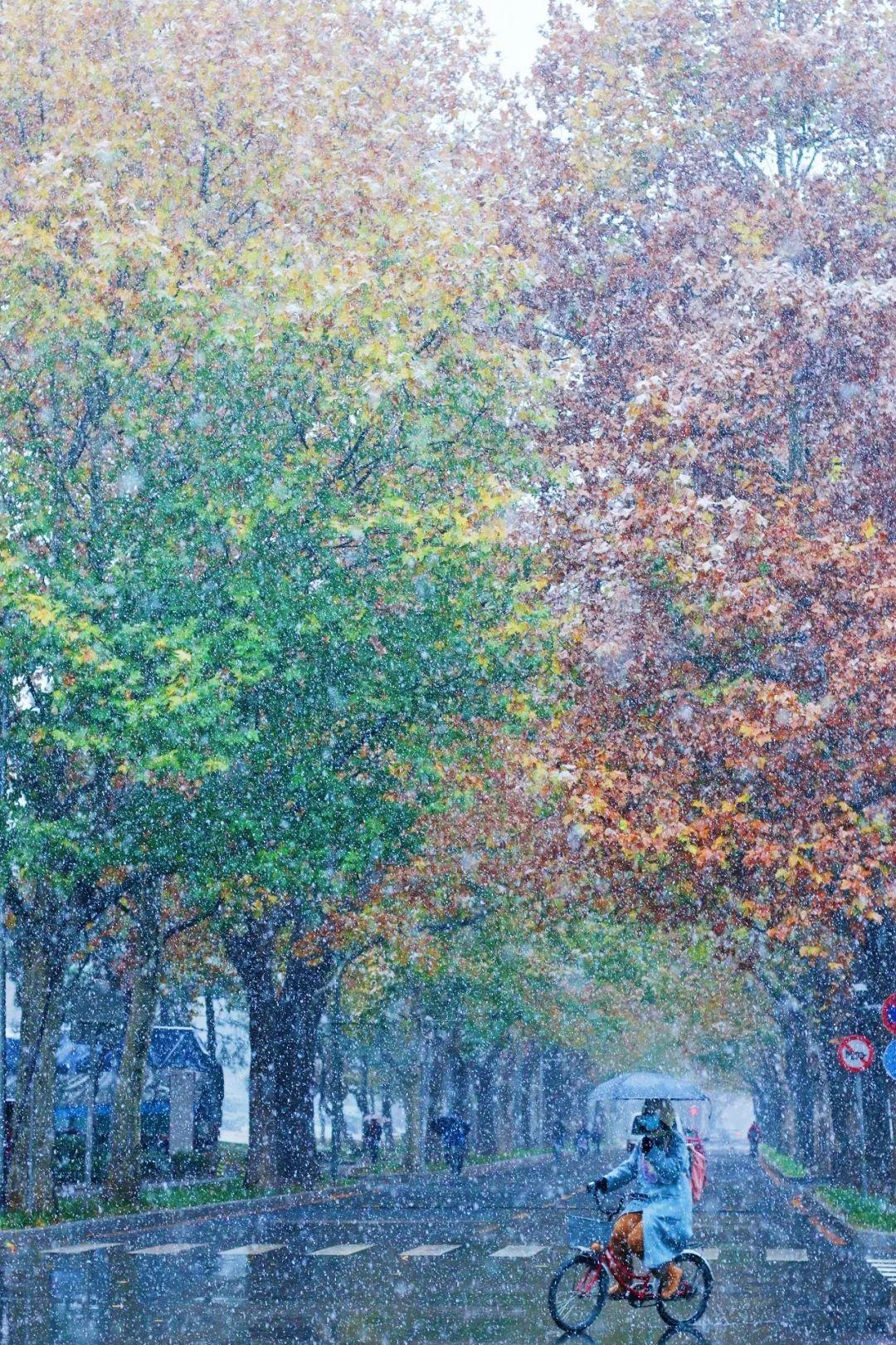 初雪如约,与清华共赴白首图片