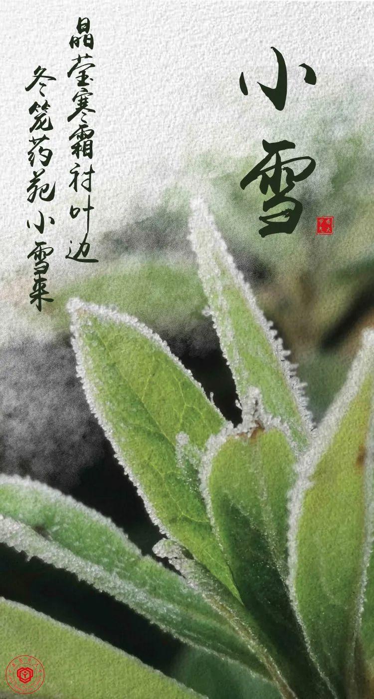 晶莹寒霜衬叶边,冬笼药苑小雪来图片