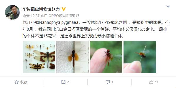 四川华希昆虫博物馆发现世界最小蜻蜓