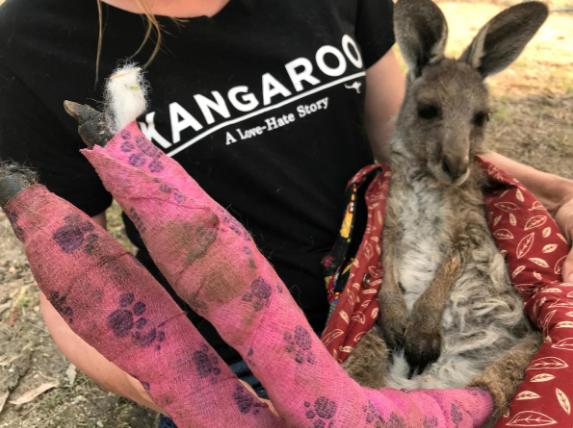 救援人员抱着后腿被烧伤的澳大利亚袋鼠(路透社)