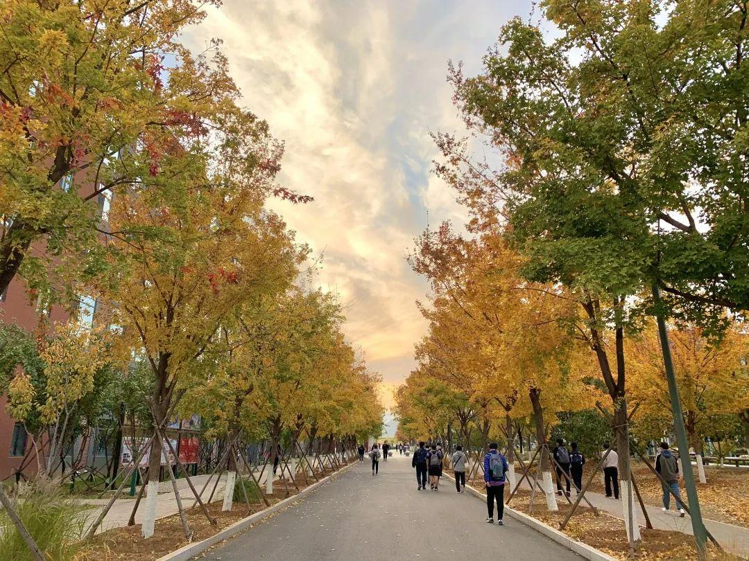 邂逅!在北化,等一阵秋风,迎一场秋景图片