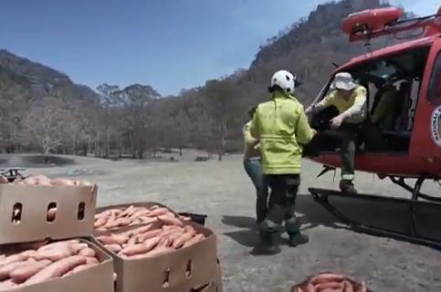 红薯被装上直升机(图源:澳洲第7新闻网)