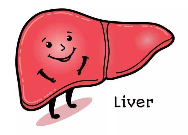 如何护养肾脏,强大肾脏功能?做好3点,排出体内尿酸,缓解痛风