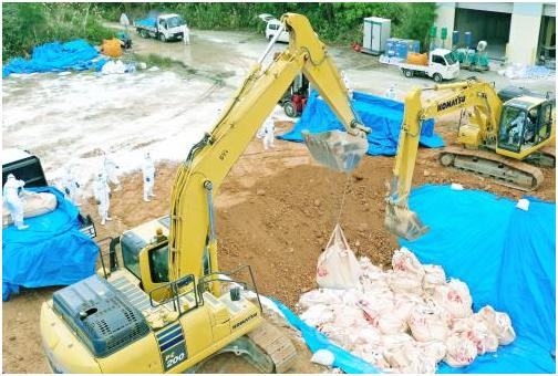 9日,工作人员正在埋除被处理后的猪 图源:《冲绳时报》