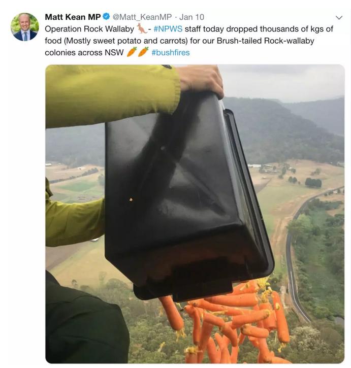 为袋鼠投放食物。/推特