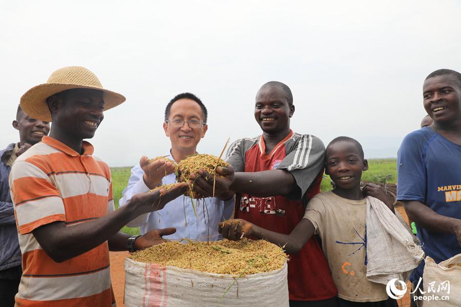海外网评:在这个非洲国家 中国杂交水稻火了图片
