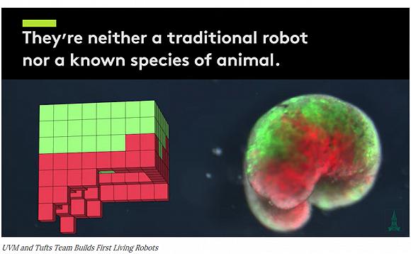 """""""异种机器人""""展示图。来源:Sam Kriegman, UVM"""