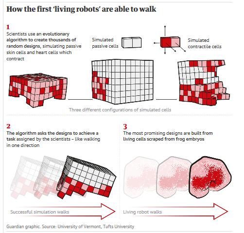 """""""异种机器人""""示意图。来源:卫报"""