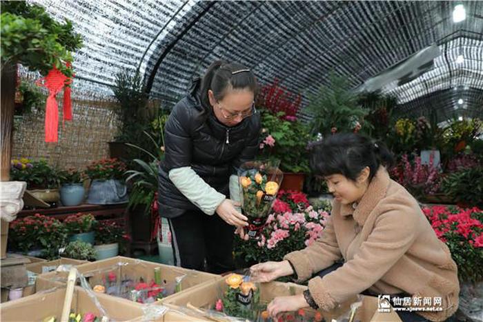 仙居:春节临近 花卉走俏图片