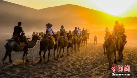 资料图:骆驼。 王斌银 摄