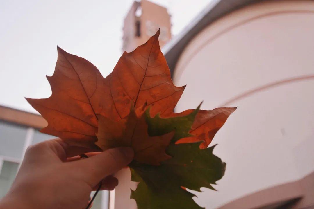 七彩山大丨一年好景君须记,最是橙黄橘绿时图片