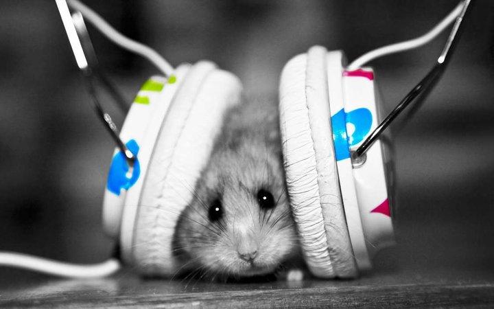 就想「对牛弹琴」,Spotify 要为你的宠物做歌单