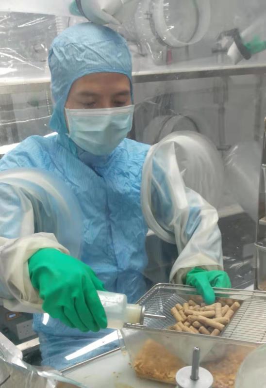 无菌鼠生活在绝对无菌的环境 受访者提供